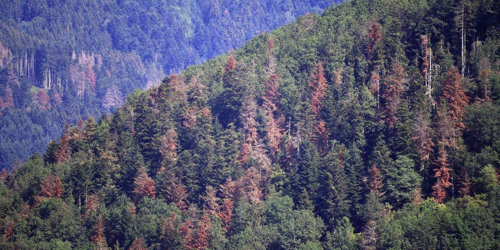 Le Grand-Est tente de préparer ses forêts au réchauffement climatique