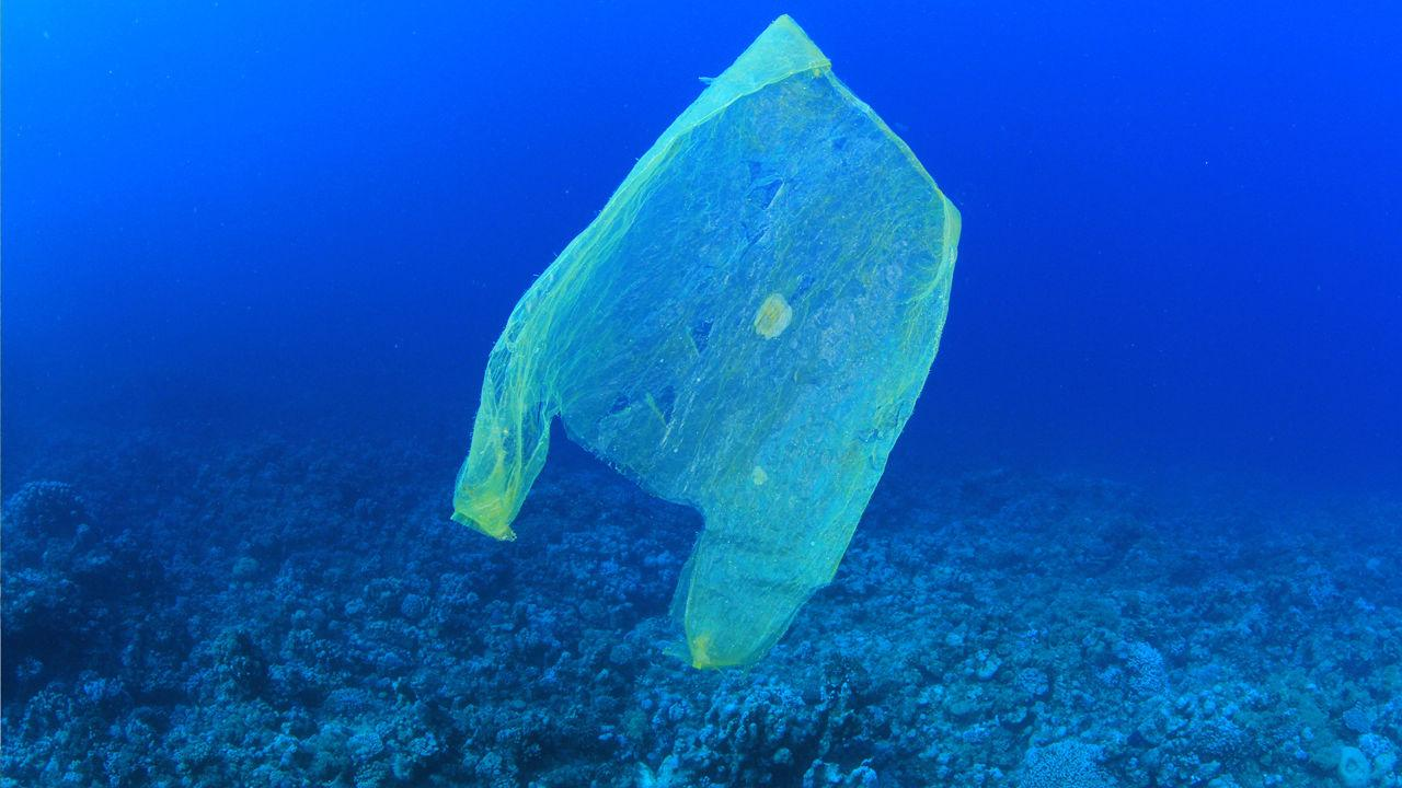 Le plastique, serial killer des océans