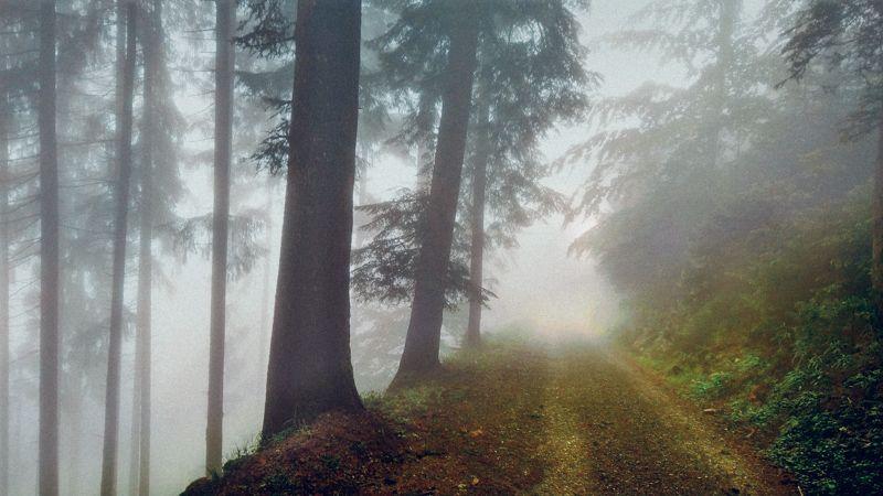Où va la forêt française ?