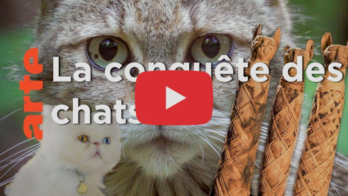 Le docu : Comment le chat a conquis le monde