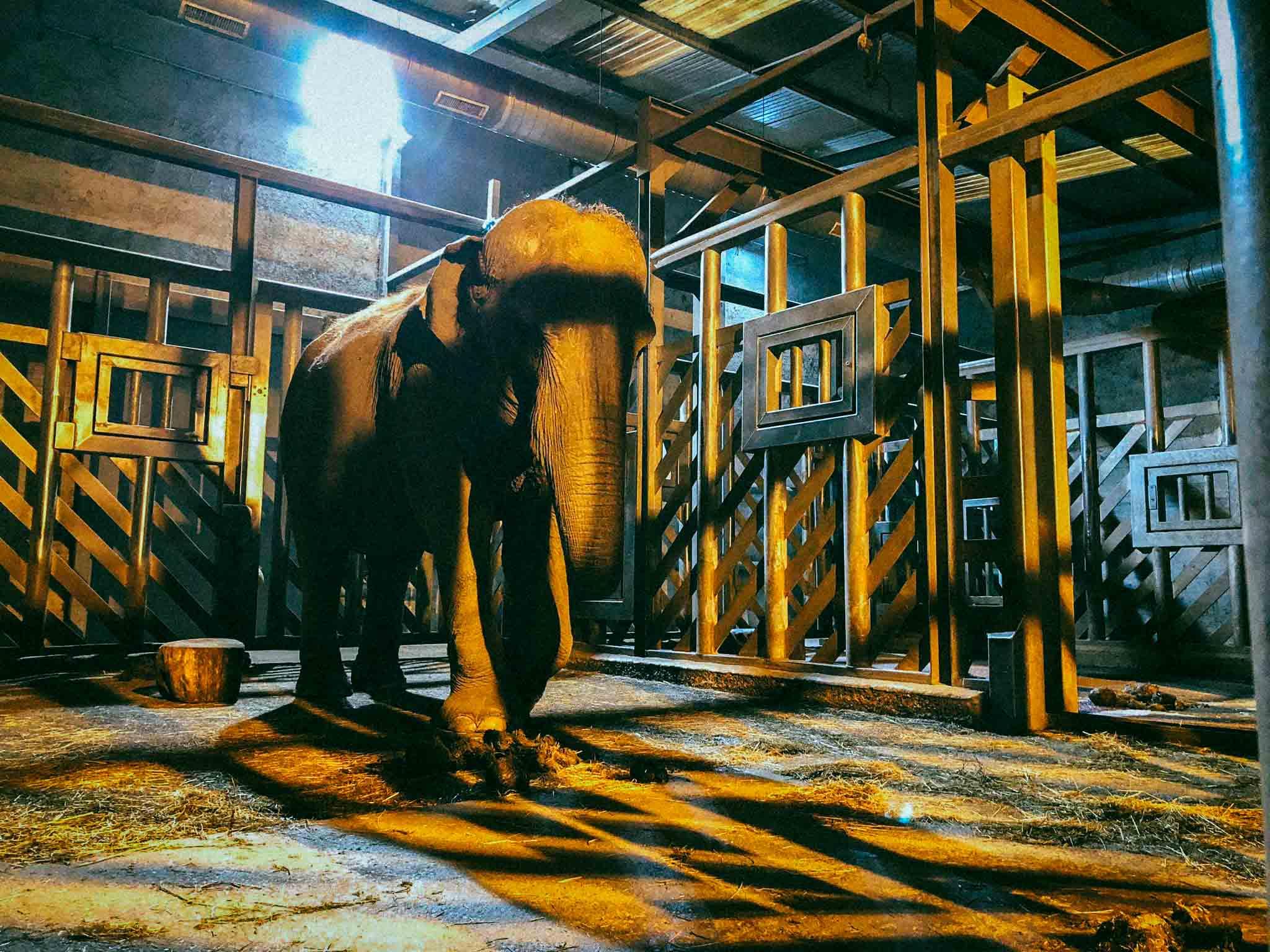 Dans l'ancien zoo de Pont-Scorff, le réensauvagement pas à pas