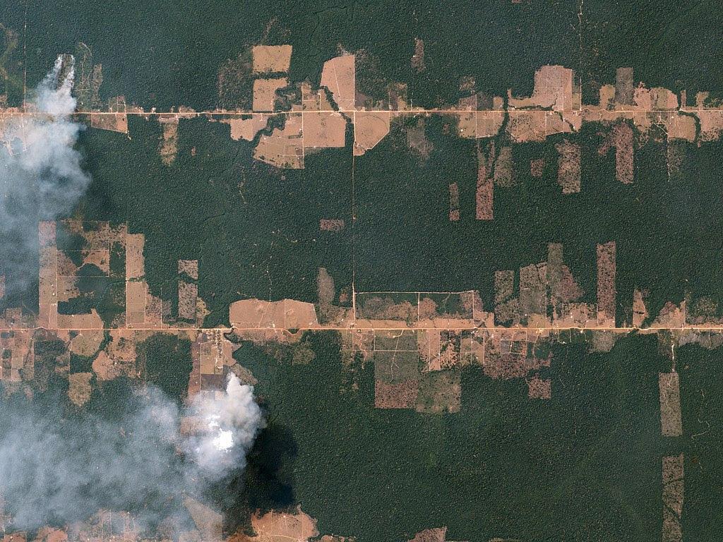 43 millions d'hectares de forêt perdus entre 2004 et 2017