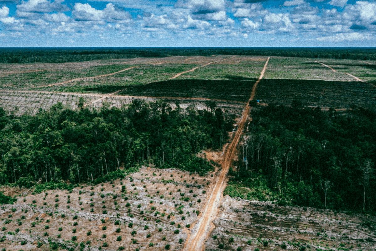 Le Conseil d'Etat met fin aux avantages fiscaux pour (tous) les carburants à base d'huile de palme
