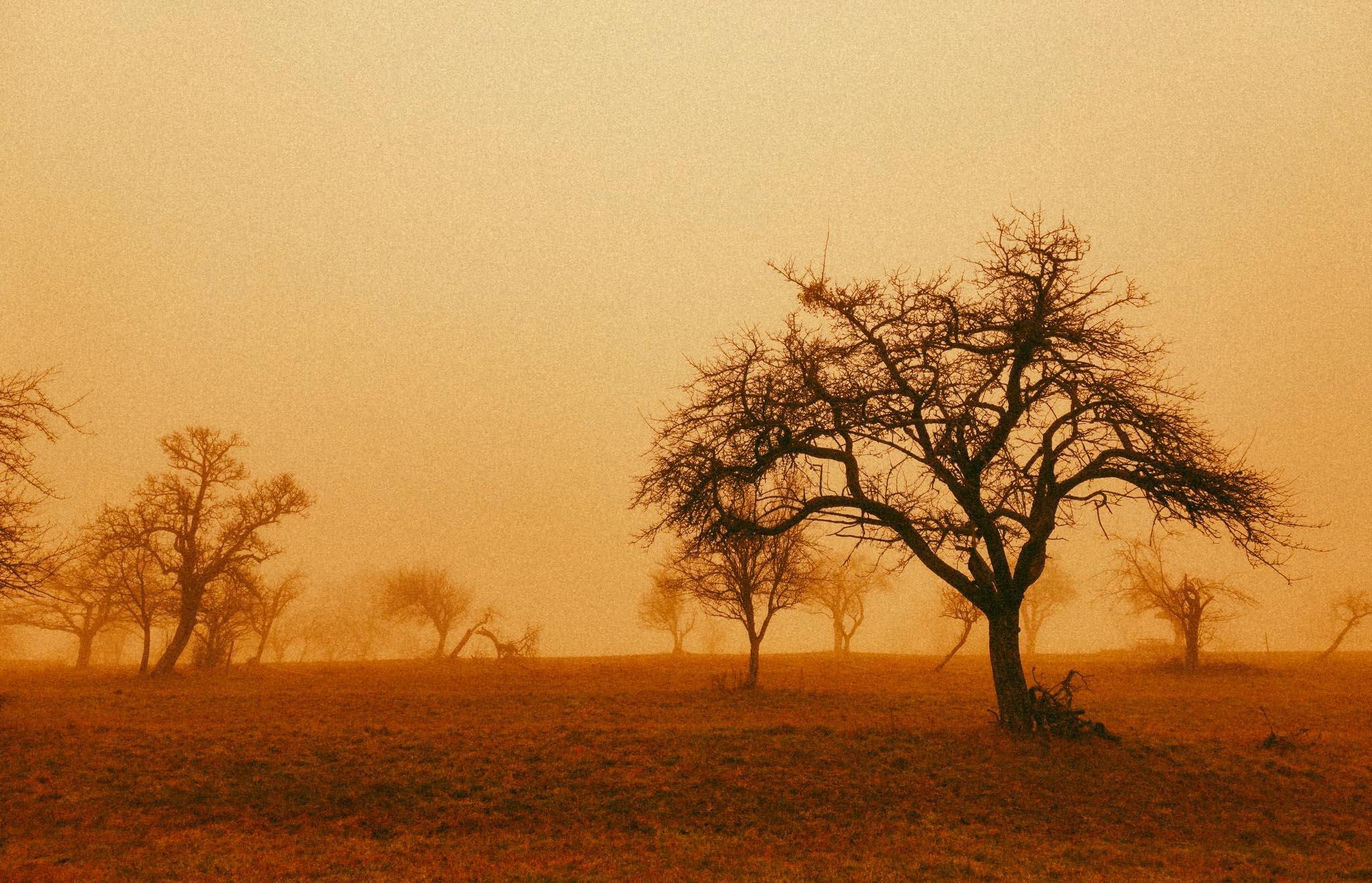 Le vent mauvais du Sahara